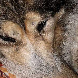 Etiología del miedo en los perros, periodos vitales (I)