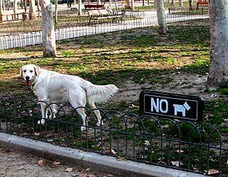 Perros y problemas en el Parque de El Retiro (Madrid).