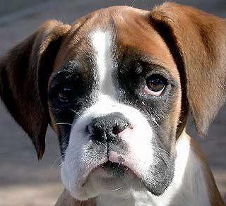 S-PAC-1: Esperanza para el tratamiento del cáncer en perros