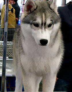 79 Exposición Internacional Canina Barcelona 2010