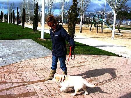 Cachorro sin vacunas ¿salir o no salir a la calle?