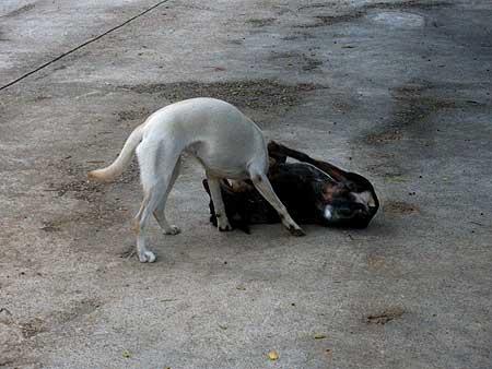 La importancia de las zonas de esparcimiento y ocio para perros.