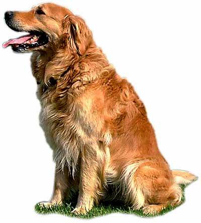 Cómo mejorar la calidad de vida del perro mayor.