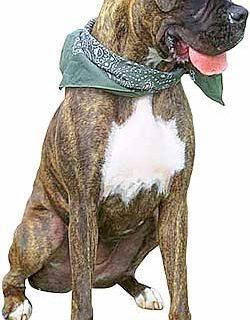 Las cinco razas de perros más afectadas por el cáncer