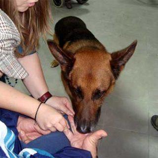 Terapia Asistida con Animales y Discapacidad Intelectual, por Miguel Ángel Signes.