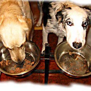 Mi perro es agresivo con la comida ¿cómo actuar?