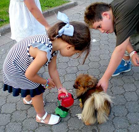 Terapia Asistida con Animales de compañía y niños.