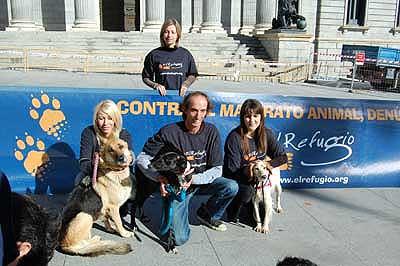 Nuevo Código Penal contra el maltrato animal.