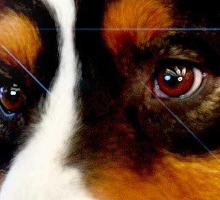 Hacia el origen del pensamiento y razonamiento canino. El futuro del adiestramiento canino.