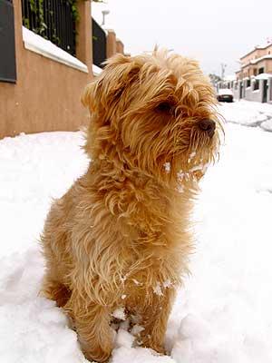 Los diez problemas más habituales de comportamiento canino.