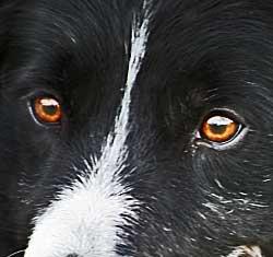 Libro Adiestramiento canino cognitivo emocional.