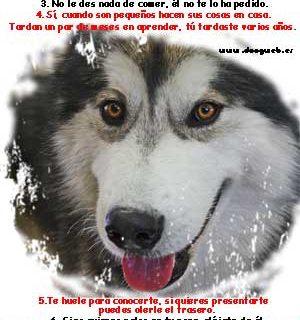 Decálogo para las visitas... (www.doogweb.es).