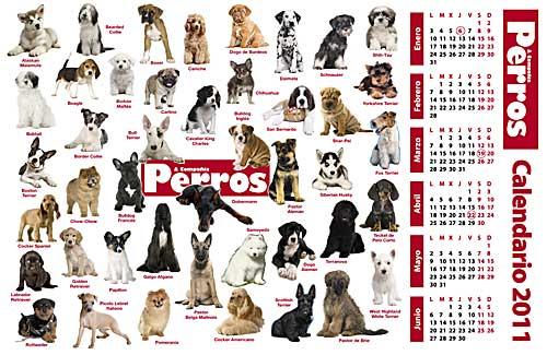 Calendario 2011 de cachorros de perros. Revista Perros Y Compañía, enero de 2011.