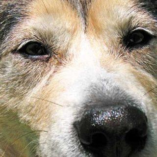 Perros, miedo a los petardos y contracondicionamiento.