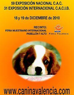 31 Exposición Canina Internacional de Valencia.
