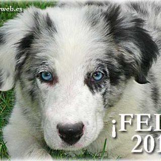Desde doogweb te deseamos un Feliz 2011.