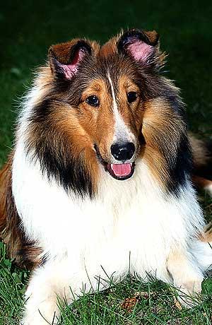 Modelado y moldeado en el adiestramiento canino.
