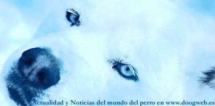 Noticias del mundo del perro, 6 a 12 de diciembre, en www.doogweb.es.