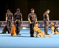 Vídeo: Homenaje a los perros de trabajo.