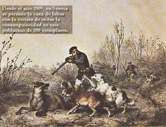 Protesta contra la caza de lobos en Suecia.