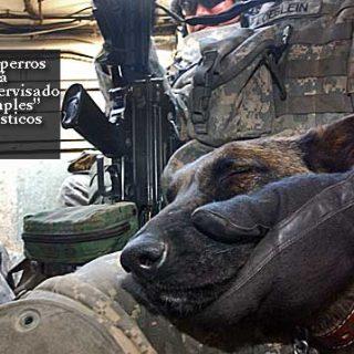 En perros sometidos a mucha presión (por ejemplo perros militares), el guía siempre es responsable de gestionar sus niveles de estrés. La vida de ambos depende de ello.