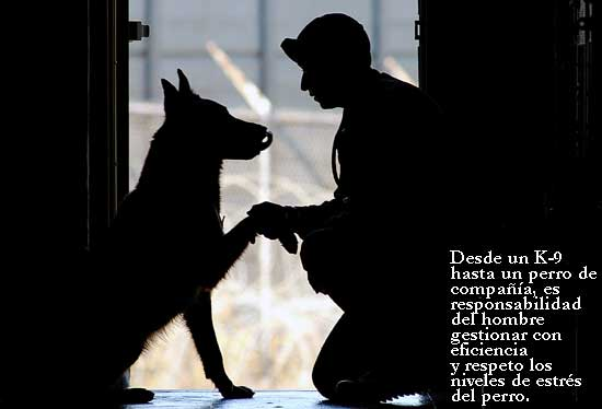 Evitar las situaciones de estrés en nuestros perros es fácil si se trata de animales de compañía. Sólo es necesario un poco de sentido común y hacer las cosas bien. Es infinitamente más complicado en perros militares o de trabajo.