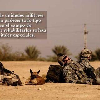 Hospital veterinario para perros militares y K-9.