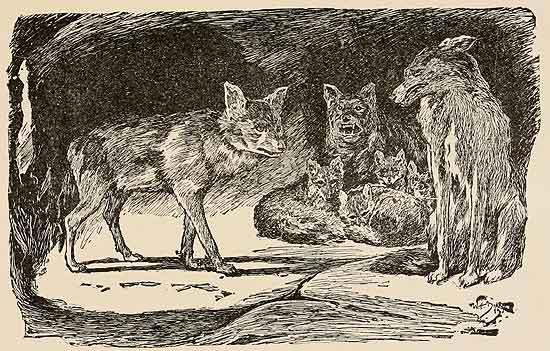 Lobo africano. El Canis aureus lupaster no es un chacal.
