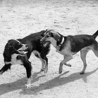 Los perros ven en blanco y negro... o no.