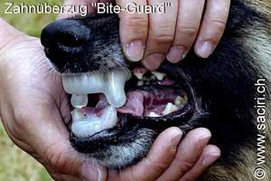 Sustituto de bozal: funda de dentadura Saciri bite guard.
