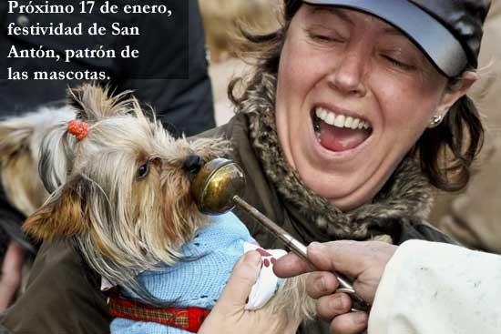 Próximo 17 de enero, el día de San Antón y de todos los animales.