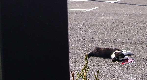 Aparece un cachorro muerto en un charco de sangre, minutos después de ser depositado en el nuevo centro de animales de Orihuela.