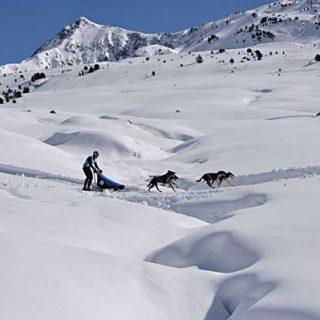 Campeonato de España de Trineos con Perros en Nieve.