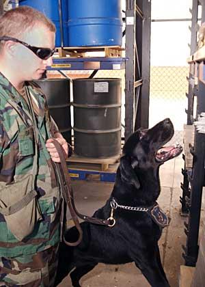 Los perros detectores pueden estar condicionados por los guías.