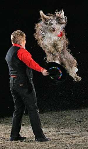 Entrevista con Lesley Neville, la reina del freestyle y dog dancing.