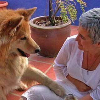 Próximos Cursos de Animal Communicator, Málaga y Granada.