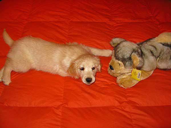 Las Puppy parties son muy importantes para la socialización del cachorro.