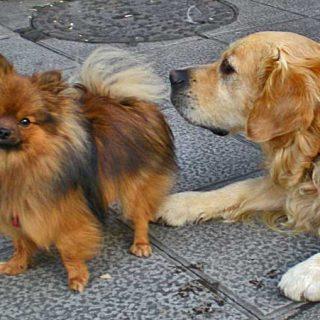 Cómo colaborar con Asociaciones Protectoras de Animales.
