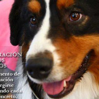 Castración en perros, el momento idóneo.