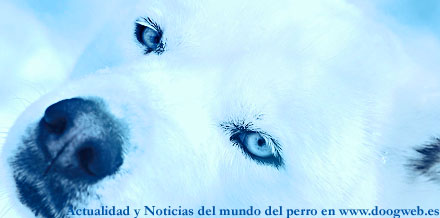 Noticias del mundo del perro, 21 a 27 de marzo en doogweb.