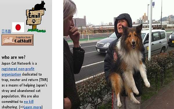 Perros supervivientes del tsunami de Japón necesitan ayuda.