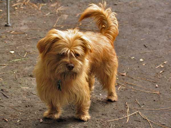 Los perros callejeros de Rumanía, en peligro.