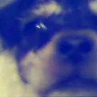 Seprona ha identificado al presunto autor de la tortura de dos cachorros en Badajoz en 2009, se investiga posible conexión con Asesino Knino.