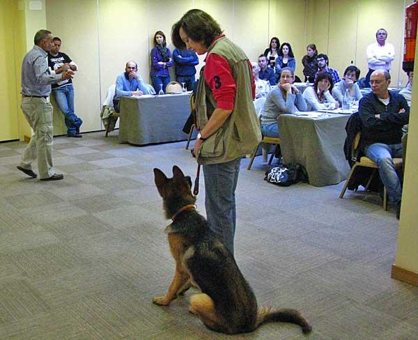 Un error habitual es someter a los perros a sesiones interminables de adiestramiento. Menos tiempo, son siempre mejores resultados.