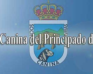 Exposición Canina de Asturias.