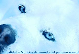 Noticias del mundo del perro, 11 a 17 de abril.