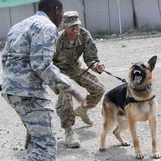 La conexión perro-guía es la clave del éxito en combate.