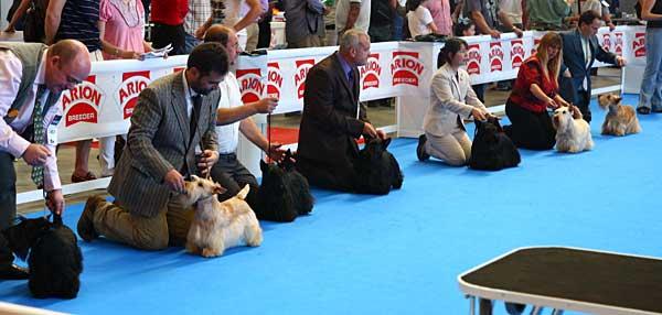 Los perros de raza, con serios problemas.