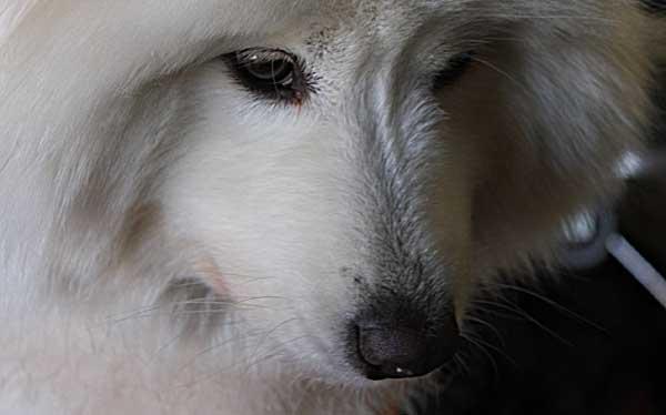 Retardantes de fuego en altos niveles en los perros y en los alimentos comerciales.