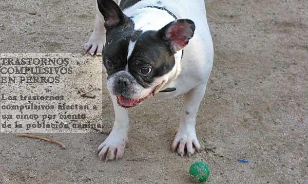 Comportamientos compulsivos y autismo en perros.